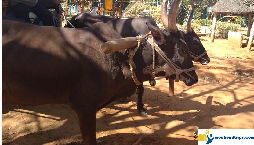 Looking for a weekend getaway with kids - try Jain farms Baglur (near Hosur)